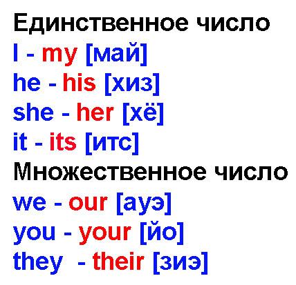 Притяжательные местоимения в английском